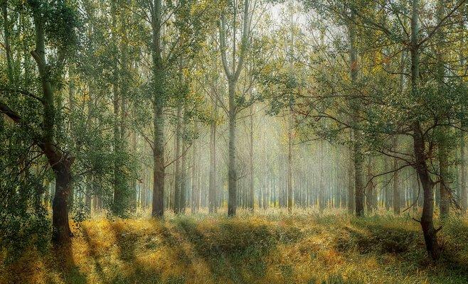 Чехия просит помощи у Украины в восстановлении лесов
