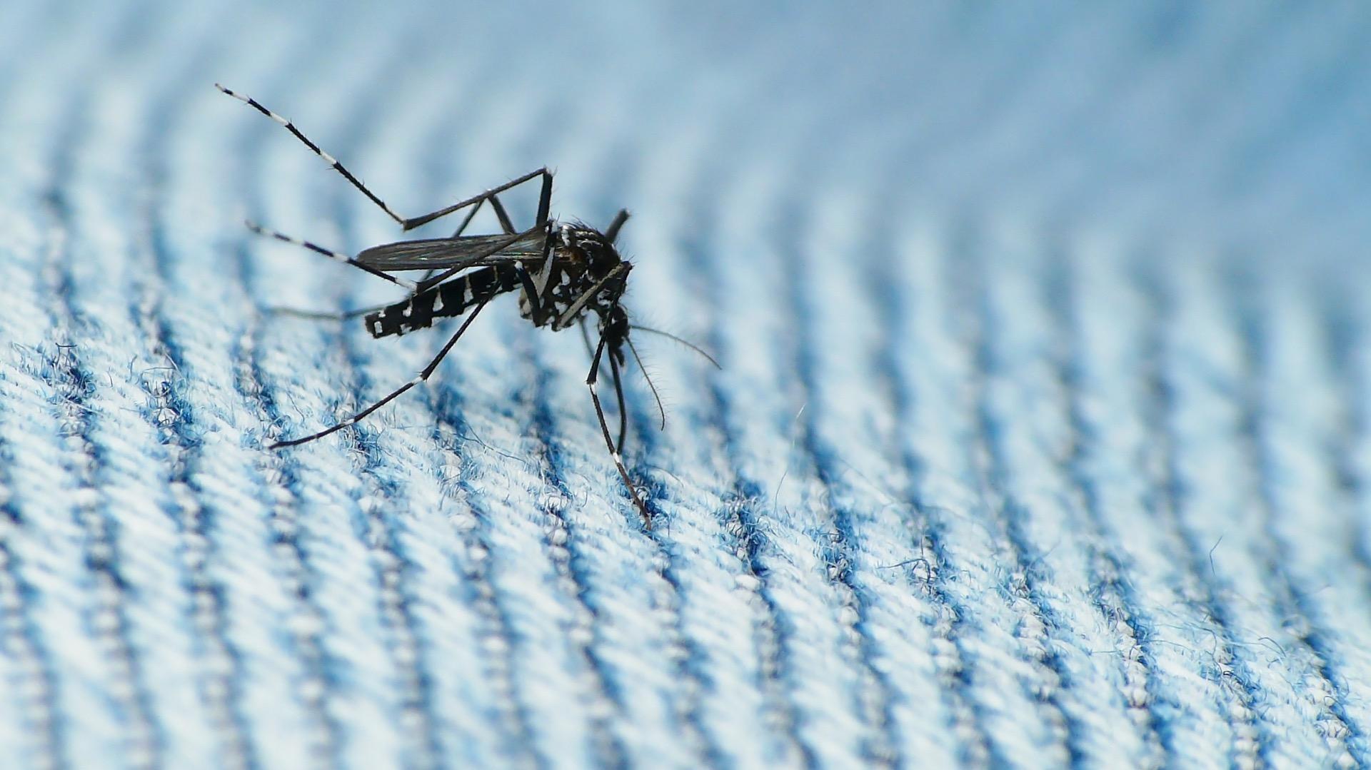 Ученые подтвердили, что вирус Зика передается половым путем