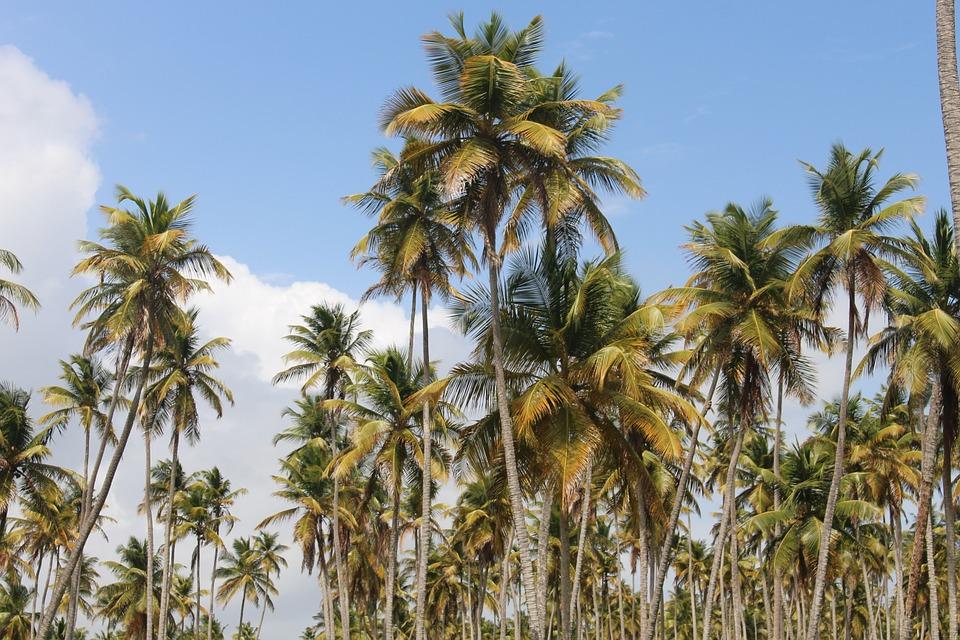 Руководитель панамской компании назвал преступлением публикацию овладельцах офшоров